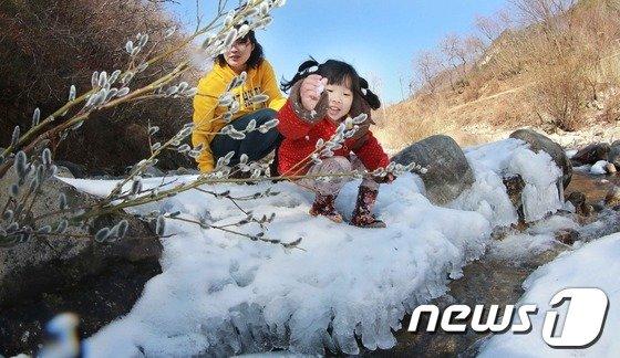 [사진]고개 내민 버들개지…봄 소식이 성큼