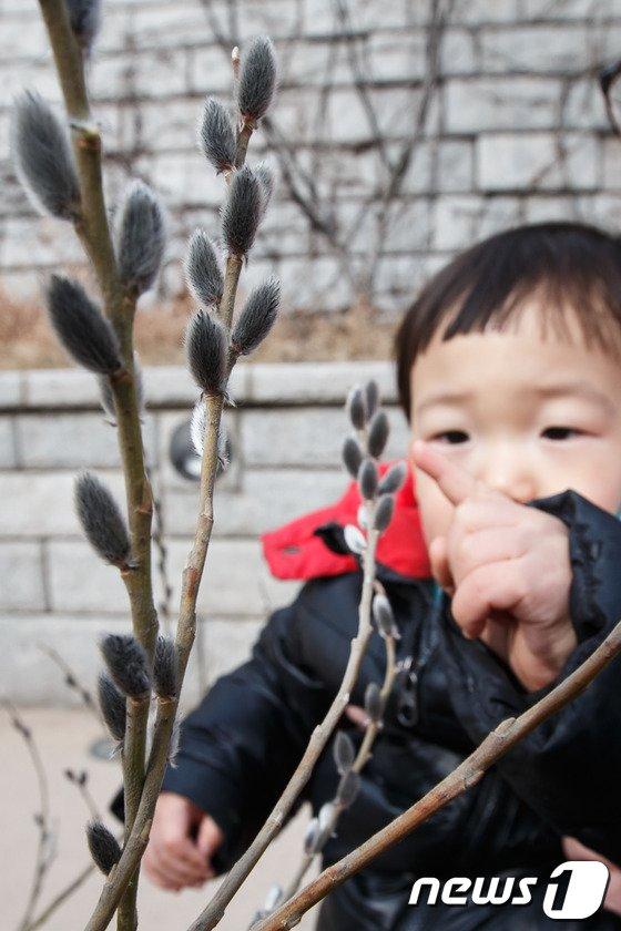 [사진]버들개지가 신기한 어린이