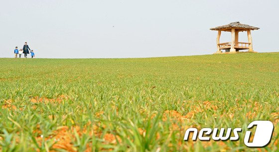 기상청은 25일 전국이  대체로 맑은 가운데 낮 최고기온이 16도까지 오르겠다고 예보했다.   © News1   김대웅 기자