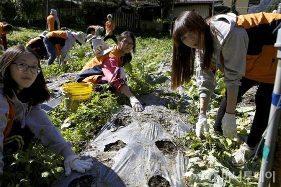 ↑한화생명 해피프렌즈 청소년 봉사단이 25일 대만의 낙후지역인 우제를 찾아, 빈곤 가정에 페인트칠하기, 지붕 고치기, 농작물 수확 등 봉사활동을 실시했다. 청소년봉사단원들이 배추 수확을 돕고 있다.