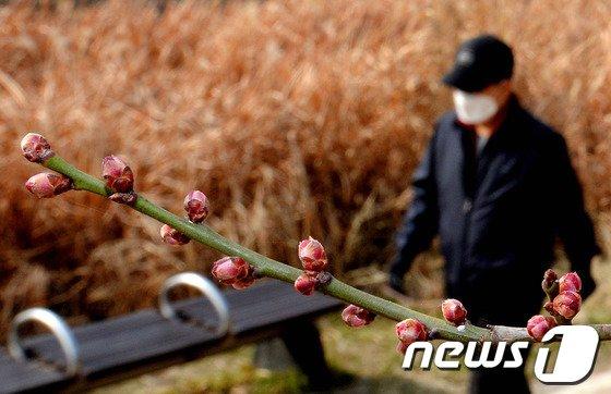[사진]다가오는 봄 '미세먼지만 없었더라면...'