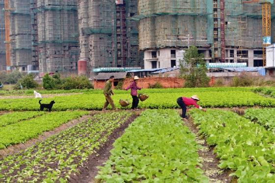 중국 도시화의 현주소