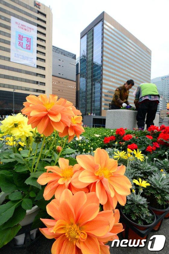 [사진]광화문에도 싱그러운 봄이