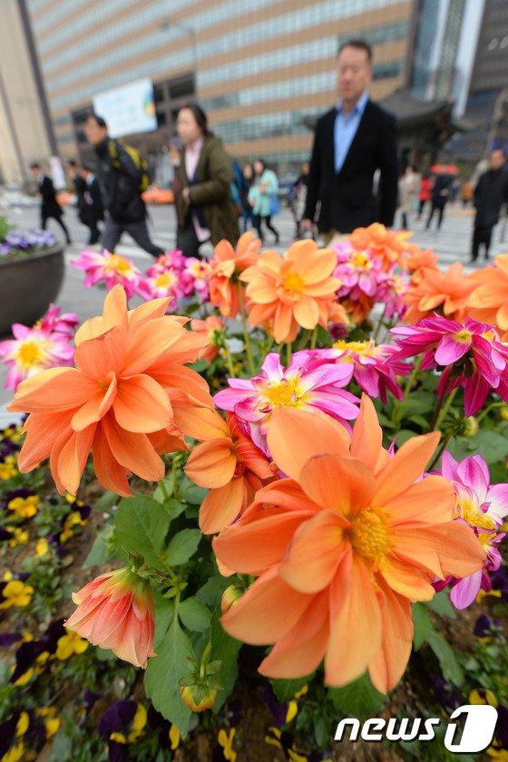 [사진]어느새 다가온 서울의 봄