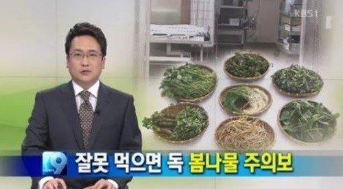 봄나물 주의보 발령(KBS1 '9시 뉴스'). © News1