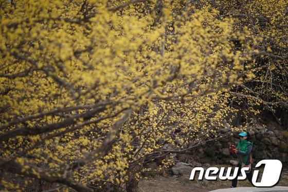 [사진]'봄을 담다'