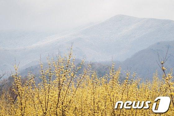 [사진]오늘 춘분 '봄과 겨울의 공존'