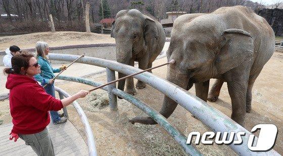 [사진]서울동물원, 야생동물 긍정적 강화훈련 교육