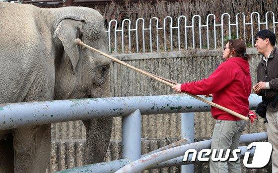 [사진]美 전문가 초빙 '코끼리 교육'