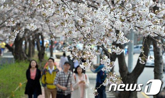 [사진]'여의도는 벌써 벚꽃세상'
