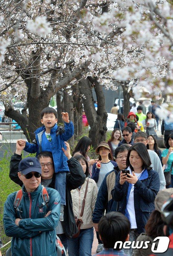 [사진]'벚꽃이 손에 닿을 듯 말듯'