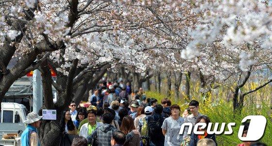[사진]'여의도에 벌써 벚꽃이 활짝?'