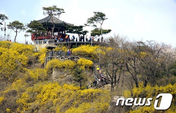 [사진]'개나리 핀 응봉산으로 봄 나들이 가세'