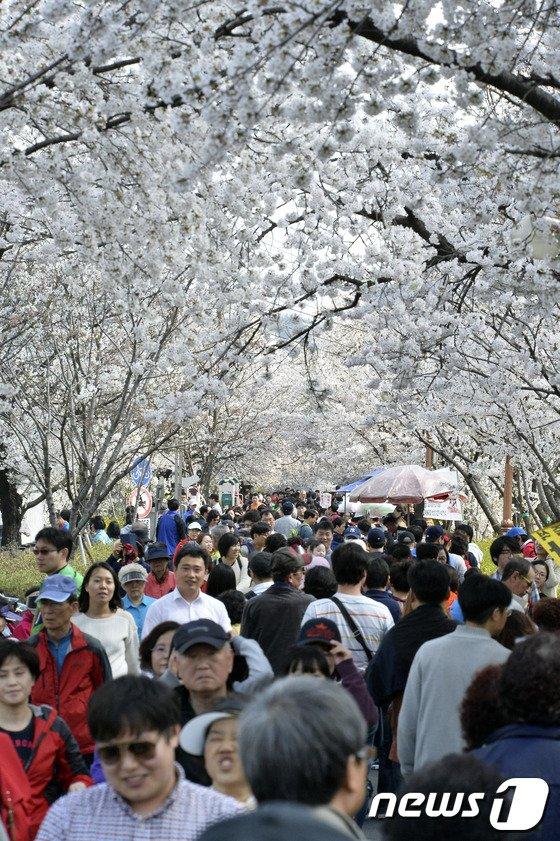 [사진]벚꽃구경 나온 상춘인파