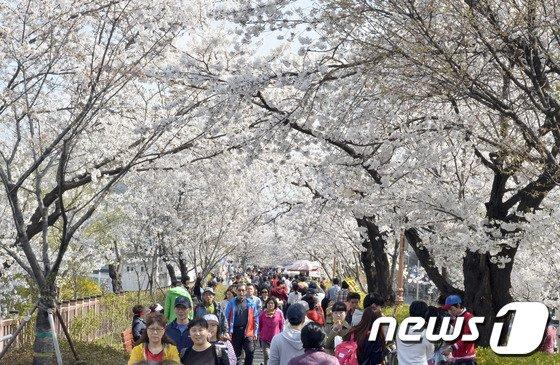[사진]'서울에도 벚꽃이 활짝'