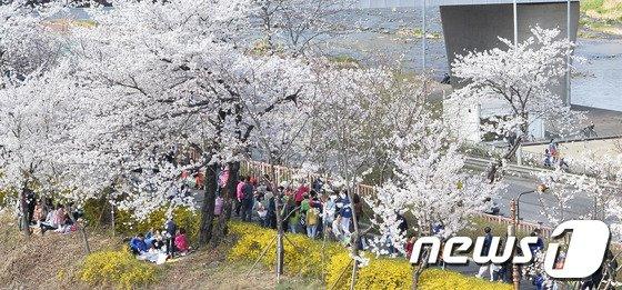 [사진]'벚꽃길 산책즐겨요'