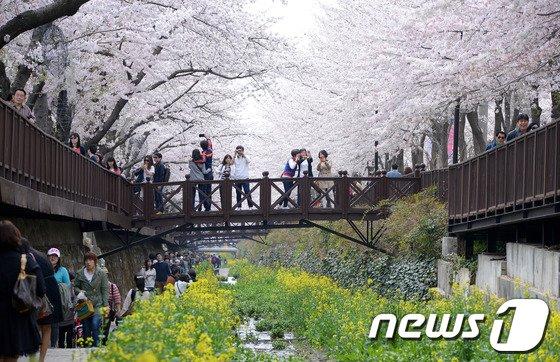 [사진]'벚꽃에 빠진 상춘객들'
