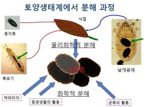토양생태계의 분해과정. © News1