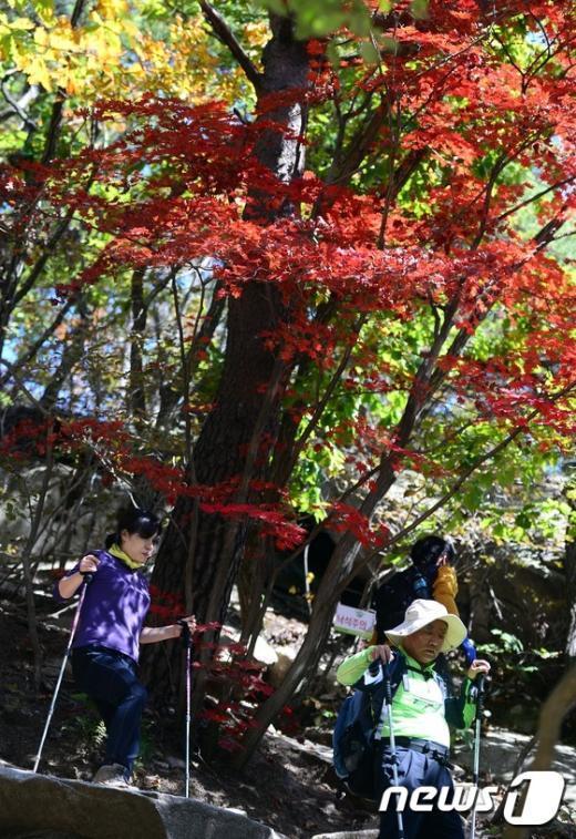 [사진]'가을이다'
