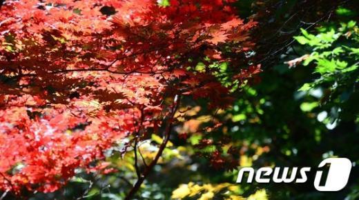 [사진]가을 色 입은 북한산 단풍