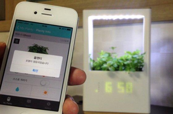 엔씽의 Iot(사물인터넷) 기술을 이용한 화초관리 시스템 '플랜티'(planty)/사진=엔씽 제공