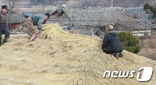 [사진]함양군, 초가지붕 이엉잇기 한창
