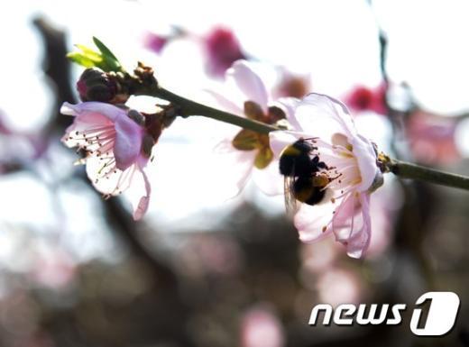 [사진]'봄을 찾아 왔어요'