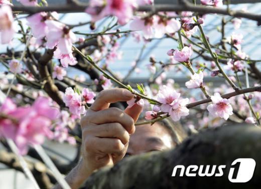 [사진]'봄! 봄! 봄이 왔어요'