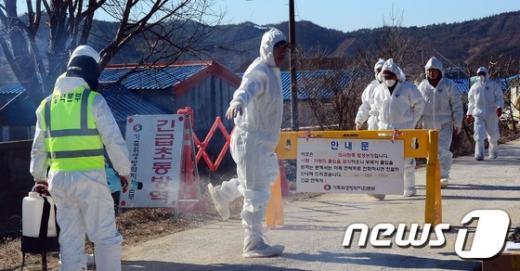 [사진]구제역 발생 농가 '소독은 철저하게'