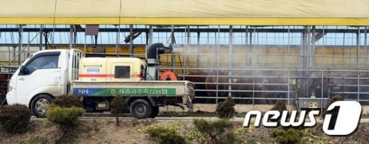 [사진]축사에 소독약품 뿌리는 방역당국