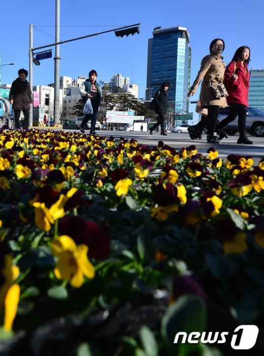 [사진]'꽃을 시샘하듯 찾아온 추위'