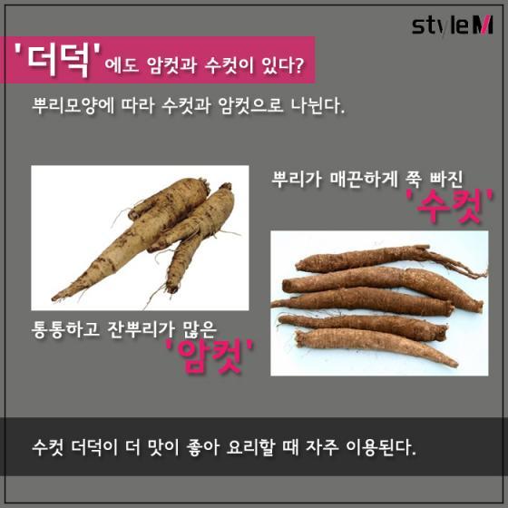 [카드뉴스] '밥 반찬의 비밀' 더덕vs우엉…봄에 먹어야 하는 이유?