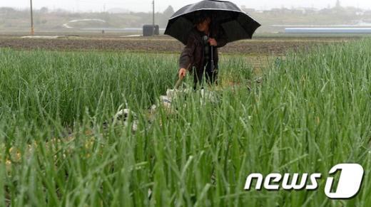[사진]곡우에 내리는 비