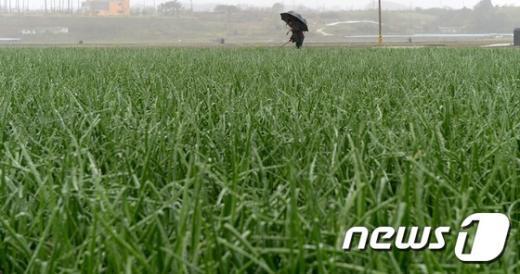 [사진]비 내리는 '곡우'