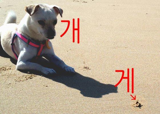 """""""게""""와 """"개"""", 소리로 구분할 수 있나요?"""