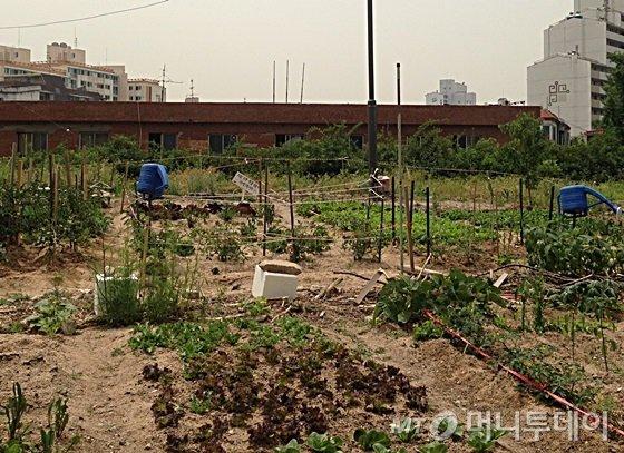 서울 '공릉 행복주택' 부지가 주민 텃밭으로 이용되고 있다./사진=신현우 기자