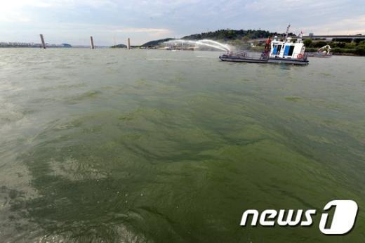 [사진]한강은 지금 '녹조라떼'