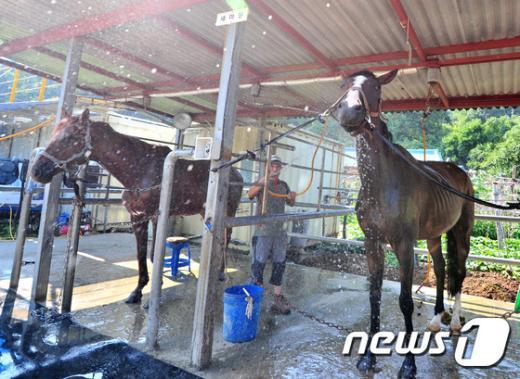 [사진]찬물 샤워하는 '馬'