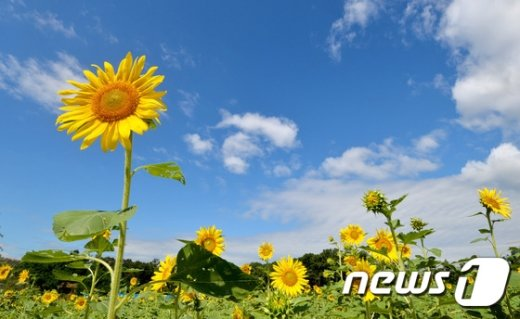 /뉴스1 / (수원=뉴스1) 이재명 기자 © News1