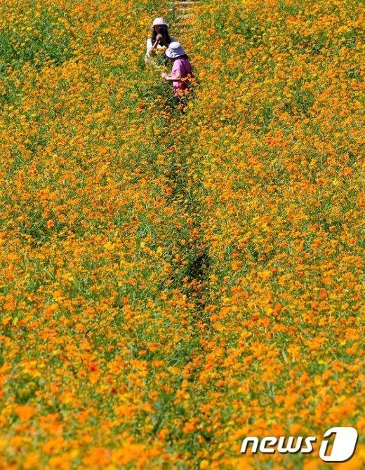 [사진]'가을로 가는 풍경'