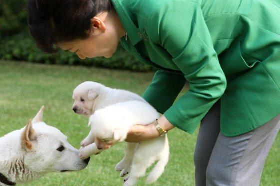 청와대의 진돗개 가족과 함께 한 박근혜 대통령. / 사진=박 대통령 페이스북