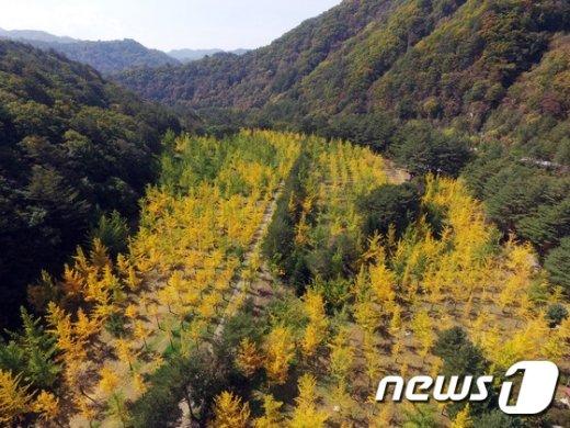 [사진]가을의 색