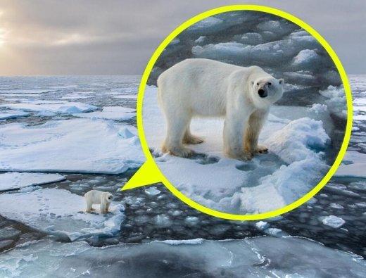 유빙에 갇힌 북극곰의 안타까운 표정