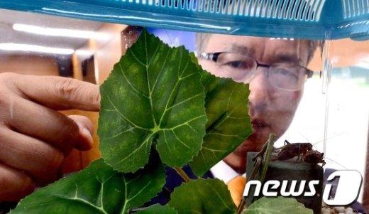 """[사진]""""왕귀뚜라미 돌보기로 마음 안정 찾으세요"""""""