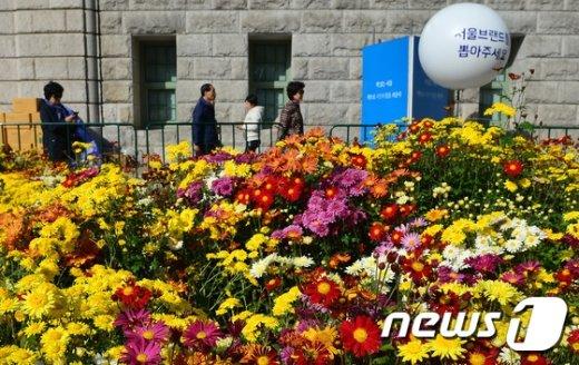 [사진]'서울광장에 국화꽃 구경 오세요'
