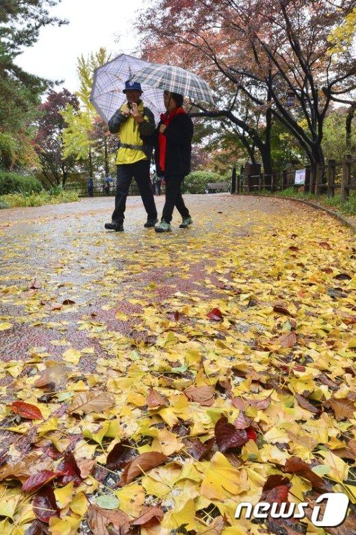 [사진]가을비에 떨어진 낙엽