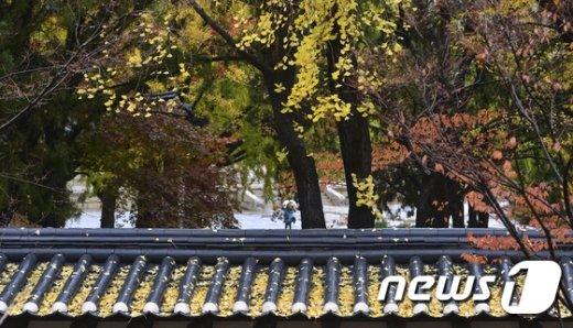 [사진]'가을이 가나봐'