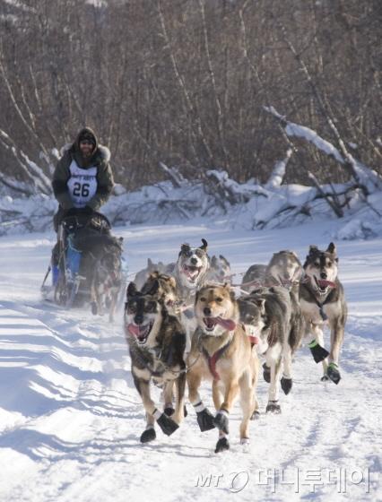 캐나다 개썰매 체험/사진제공=캐나다관광청