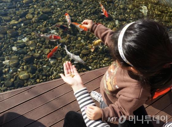 1층 로비 밖으로 인공연못이 있어 잉어에게 물고기밥을 줄 수 있다. 호텔 구석구석 아이들이 좋아할만한 아기자기한 재미가 가득하다/사진=이지혜 기자