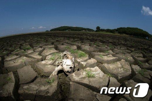 [사진]2015 뉴스1 올해의 사진...56년만의 최악 가뭄